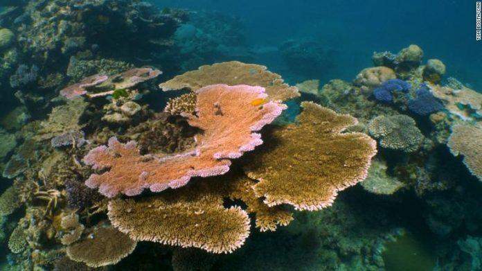 NASA lanza NeMO-Net, videojuego para que usuarios ayuden a localizar corales en todo el mundo | La Primera Plana